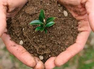 Breve historia del desarrollo de la producción ecológica en Bolivia, Ley 3525 y el CNAPE